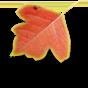 a-l-7 دعوای خانواده و برگ پاییزی