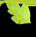 برگ سبز مشاوره