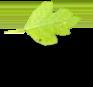 مشاور سبز زندگی